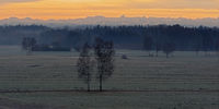 Sedge landscape in the winter dawn