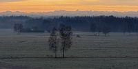 Sedge landscape in the winter dawn