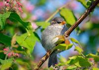 Sparrow sitting on the twig of a bush