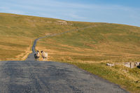 On the B6270 road between Birkdale and Nateby, Cumbria, England