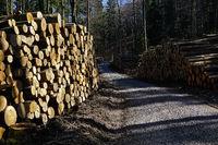 Holzstapel, Holzfällerei, Forstwirtschaft