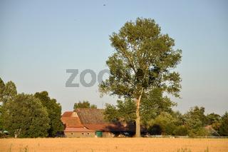 Feld mit Bauernhäusern