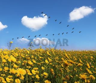 The field of pretty yellow buttercups