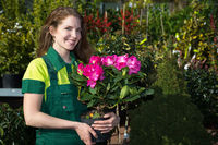 Gardener presenting potted plant with colorful flowers
