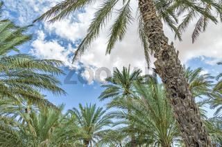 Oasis Al Haway Oman