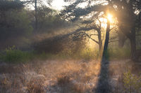 sunbeams in foggy forest at sunrise