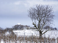 watchtower with vineyards and trees in winter
