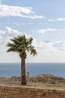 Alleinstehende Palme Kourion, Zypern