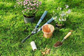 garden tools, flower pot and bulbs on grass