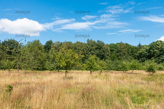 Meadow orchard in the Niendorfer Gehege, Hamburg, Germany, summer 2020