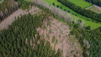 Aerial view of a destroyed forest area by bark beetles