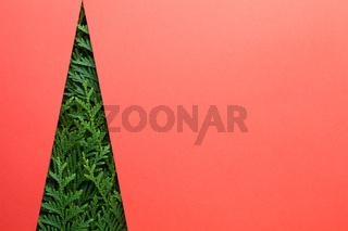 Minimal Creative Christmas Tree Made Of Thuja