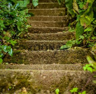 Wild Stairway