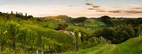 Sunset panorama of wine street in Styria. Fields of grapevines.
