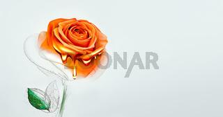 Half painted rose