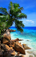 Palm tree at Anse Patates Beach, Island La Digue, Indian Ocean, Republic of Seychelles.