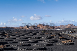 typical vineyard on Lanzarote, Canary Islands against volcanic moutain range