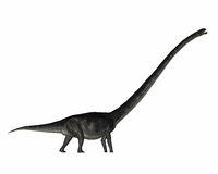 Omeisaurus dinosaur - 3D render
