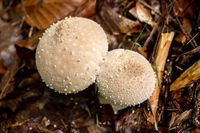 Mushrooms grow wild in the forest