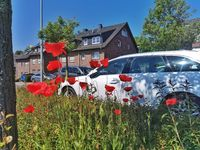 White car behind poppy flowers