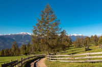 Late summer on Salten mountain, South Tyrol