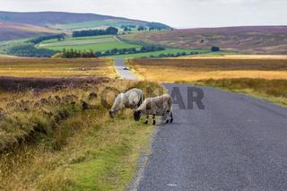 North York Moors landscape near Commondale, North Yorkshire, England, UK