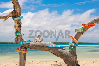 Tree trunk at coast with first names on signs