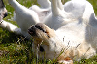 Happy dog is playing in the grass