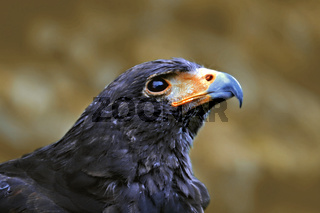 Trauriger Vogel