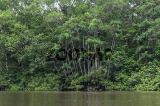 Flusslandschaft im Naturreservat Cuyabeno