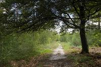 Forest in De Dellen