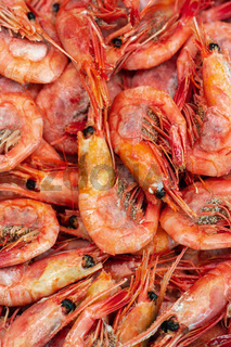 Group of boiled frozen wild shrimp with caviar cooked in sea water. Background of lot small aquatic crustaceans. Prawn - popular Asian delicacy cuisine