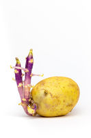 Potato  germinating on white background