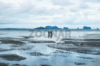Couple looking for seafood during low tide in ocean at Koh Mook, Thailand, Asia