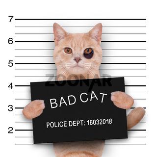 cat police mugshot