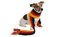 Football World Cup 2014 / Jack Russel Terrier