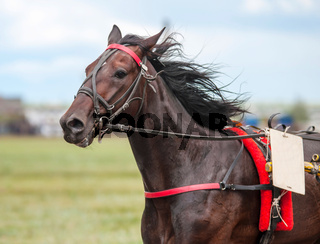 Race horse at the racetrack