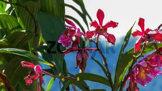 orchids growing at the ruins at machu picchu