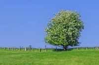 Wiese mit Weißdornstrauch vor blauem Himmel