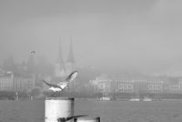 landing seagull on a bollard in Lucerne