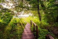 Bridge and sunbeams