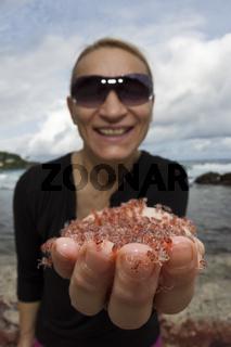 Baby Krabben kehren aus Meer zurueck, Weihnachstinsel