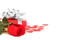 Rose and gift on white
