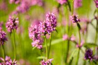 beautiful field flowers blooming in summer garden