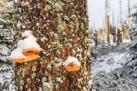 Winterlandschaft Nationalpark Harz Oderteich