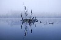 Tree stump island in the water, November fog, Bislicher Insel nature reserve, Xanten, Germany