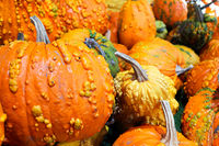 A background of various bumpy warty pumpkins and squashes