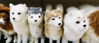 Toy dogs