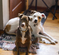 Two Dogs Sit by The Door Looking at the Camera