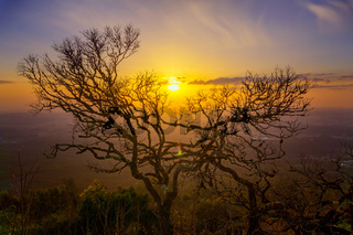 Bare branches of old tree and sunset